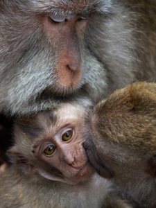 Monkey Love by Lynn Fothergill, Open Image of the Night, Feb 2013