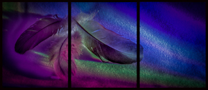 Feathered Rainbow by Theresa Simson, Set Image of the Night, Aug 2015