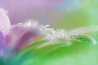 open-highly-commended-droplets-by-pauline-smith