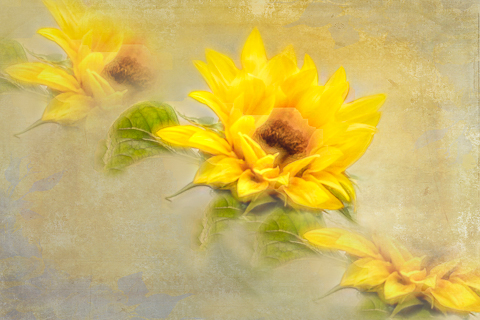 Suntastic Yellow by Pauline Smith