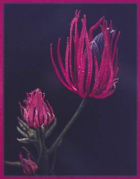 vermillion-and-violet-by-lynn-fothergill-set-image-of-the-night-2